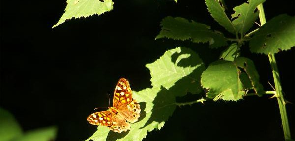 Butterfly-Effect.jpg